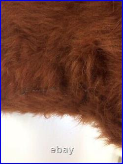 Quality, Very Large Taxidermy Ginger Highland Bull / Cow. Rare Scottish